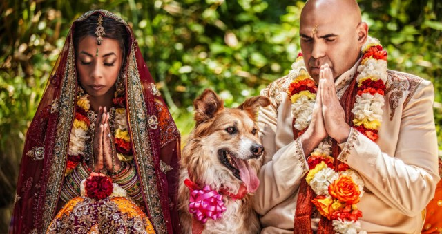 Indian Wedding, and puppy makes three